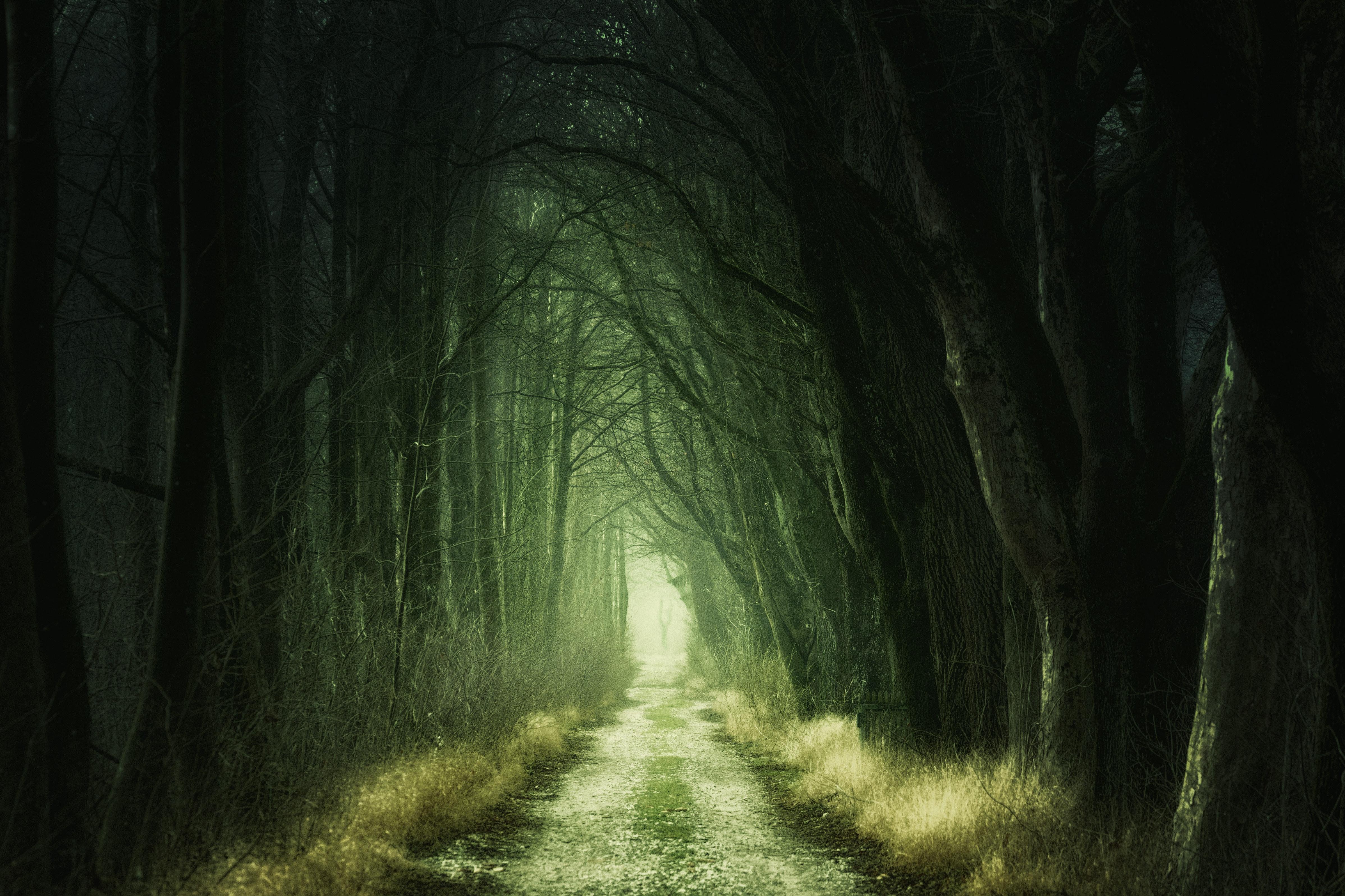 dark-daylight-eerie-1165982